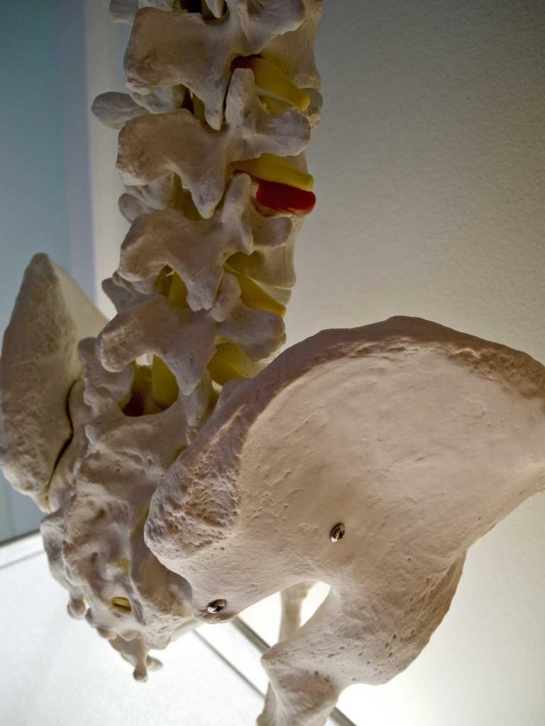 Skelettmodell des Bekenbodens